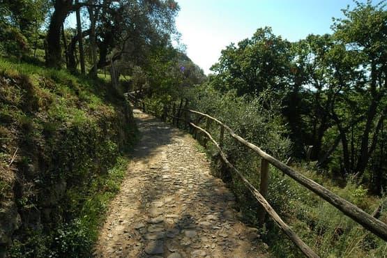 Park of Portofino Half Day Hike Experience