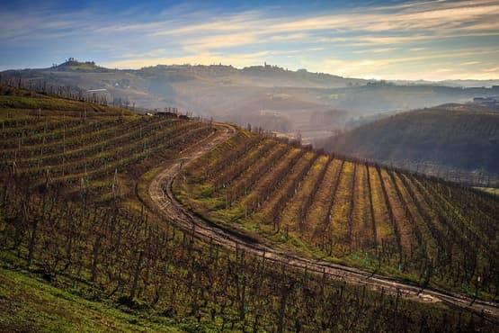 Private Barolo / Barbaresco - Piedmont Wine Tours and Tastings